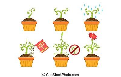 roślina, kwiat, komplet, kiełek, garnek, ilustracja, wektor, wzrost, rozwój, gradacja