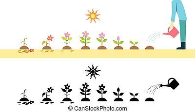 roślina, kwiat, sztuka, pomyłka, wektor, czas, rozwój