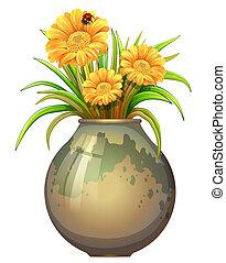 roślina, kwiaty, garnek, rozkwiecony