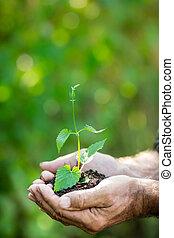roślina, młody, przeciw, zielone tło, siła robocza