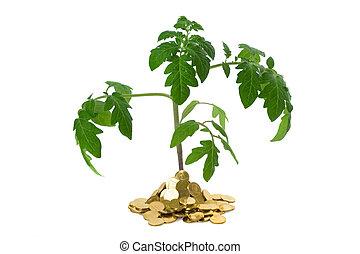 roślina, monety, stos, rozrosły
