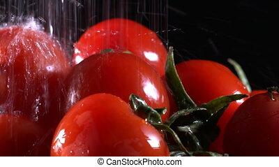 roślina, organiczny, pomidor