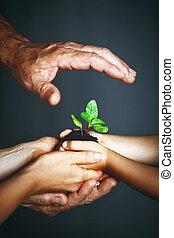 roślina, pojęcie, family., siła robocza, ojciec, zielony, dziecko, macierz, utrzymywać