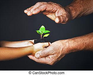 roślina, pojęcie, family., siła robocza, ojciec, zielony, dziecko, utrzymywać