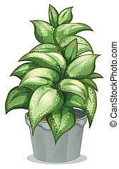 roślina, pokryty obficie liśćmi