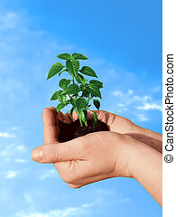 roślina, ręka