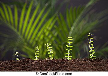 roślina, rozwój, z, gleba
