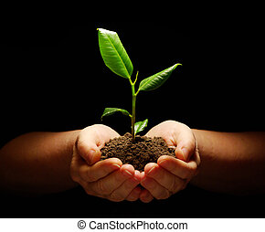 roślina, siła robocza