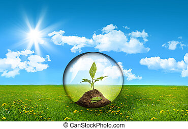 roślina, szkło, kula, pole, wysoka trawa