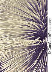 roślina, sztuka, do góry, agawa, kolczasty, tło, zamknięcie