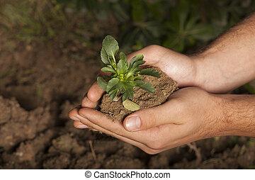 roślina, w, siła robocza, trawa, tło