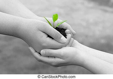 roślina, w, siła robocza