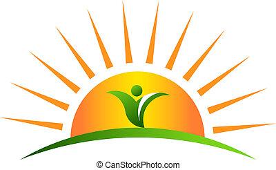 roślina, w, wschód słońca