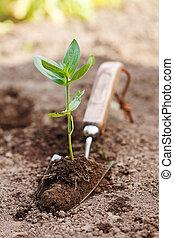 roślina, w, ziemia, na, mały, łopata