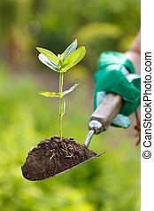 roślina, w, ziemia, na, niejaki, mały, łopata
