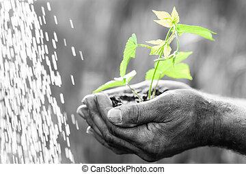 roślina, zielony, młody, siła robocza