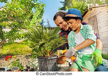 rośliny, łzawienie, ojciec, ogród, syn