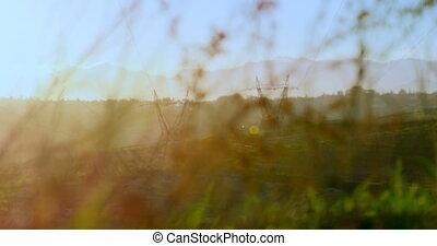rośliny, 4k, elektryczność, pylony, zobaczony, pole, dwa,...