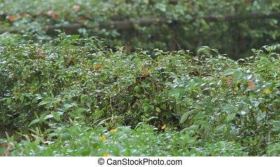 rośliny, deszczowy, season., singapore., tropikalny, jasny, zielony, rain., pod, las
