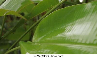 rośliny, deszczowy, season., tropikalny, jasny, zielony, rain., pod, las