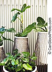 rośliny, dom, garnki, tło, dużo, biały