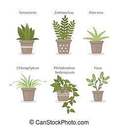 rośliny, dom, set.