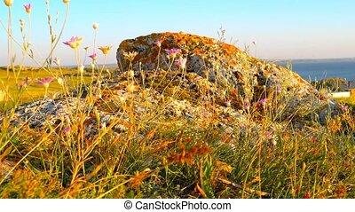 rośliny, dookoła, jałowy, skała