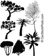 rośliny, fur-tree, drzewa, brzoza