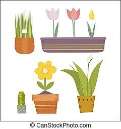 rośliny, garnek, komplet
