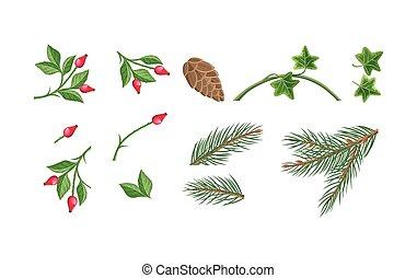 rośliny, ozdoba, ilustracje, komplet, boże narodzenie