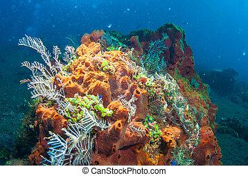 rośliny, podwodny, fish, bali, koral