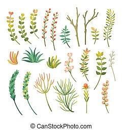 rośliny, różny, komplet, wektor, rysunek, typy