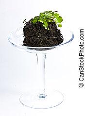 rośliny, szkło