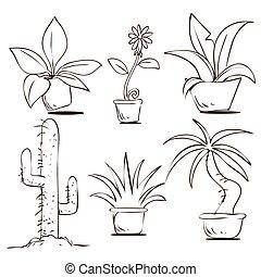 rośliny, w, garnki