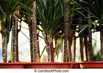 rośliny, w, ogrodowy środek