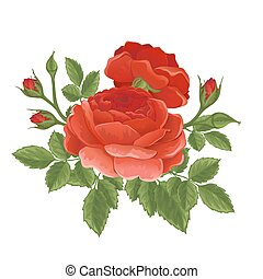 ro, engelsk, röd, grafisk, flowers.