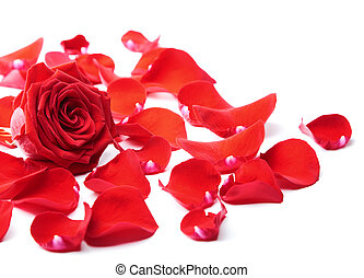 ro, isolerat, röd, petals