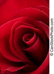 ro, närbild, röd