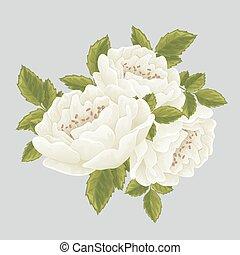 ro, vit, grafisk, blomningen, engelsk