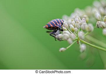 Roach on a green leaf