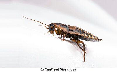 Roach over white