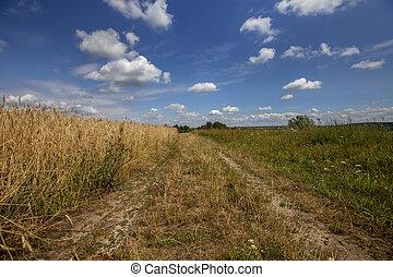 Road across the field wheat