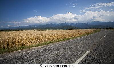 Road along edge of a wheat field