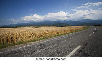 Road along edge of a wheat field