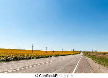 Road along sunflower field