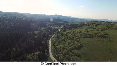 Road along the forest filled sunlight. Aerial view