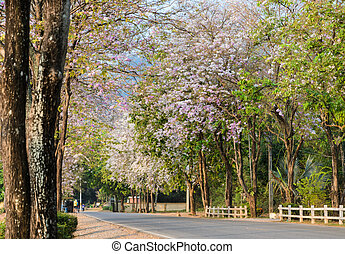 Road along with flower trees in full bloom