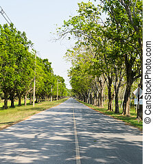 Road along with trees