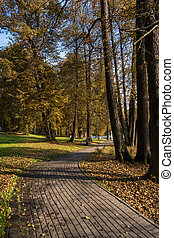 road among trees in autumn park