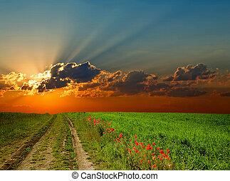 Road amongst poppy-field